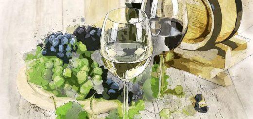 Você sabe como armazenar corretamente os seus vinhos? Confira as dicas da Evino